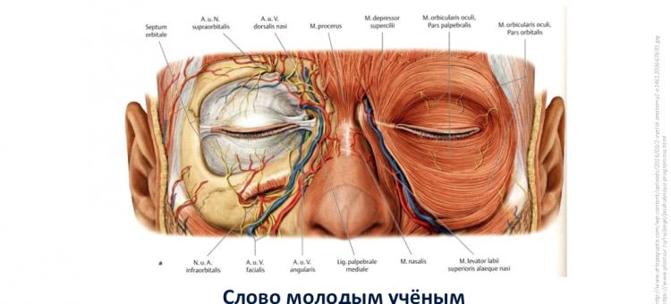 Офтальмопластика Слово Молодым ученым