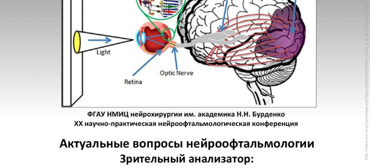 Нейроофтальмология Конференция 24 января 2020